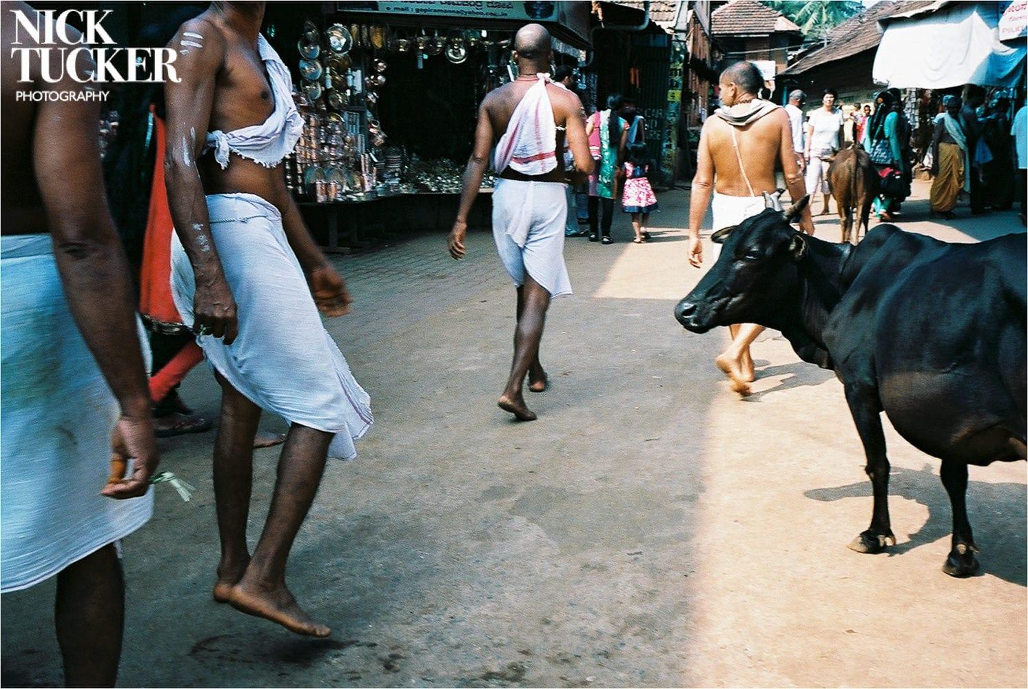 cow in gokarna town