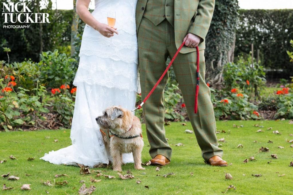 pets in wedding photos