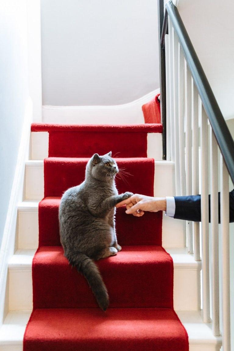 cat portrait photography